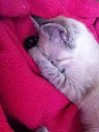 Tonka baby napping
