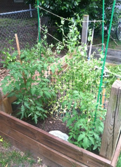 Flourishing garden