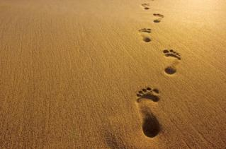 footprints-in-sand.jpg