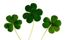 clover-green-leaves-132420.jpg