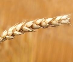 background-blur-bread-158603.jpg