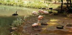 flamingo pic